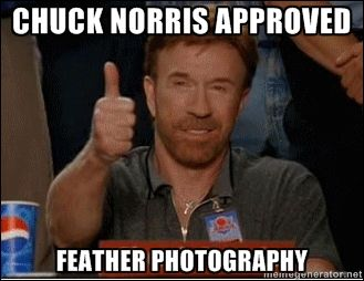 Chuck approved Feather Photography